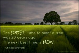 The Best Time To Plant a Tree was 20 years ago. The next best time is NOW. Quote Image